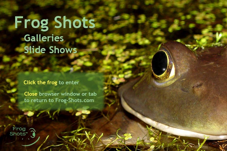 Welcome to frogshows.com